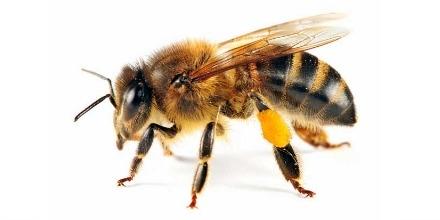 BEE_TWITTER