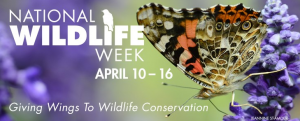 NATIONAL_WILDLIFE_WEEK_SK