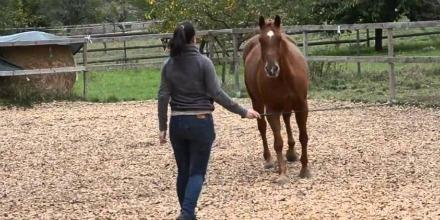 HORSE_THERAPYcc